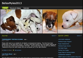 When we have Jack Russell Terrier puppies for sale, we set-up a private litter page for our clients. There clients can follow the Jack Russell Terrier puppies for sale and their progress from birth to eight weeks. Photos, 24/7 webcam, downloads, links and another private website with information to help get you set-up for your new Jack Russell Terrier. The puppies for sale that are reserved will not typically be listed on the public website.